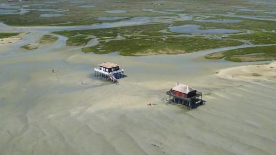 Ile au Oiseaux Bassin d'Arcachon