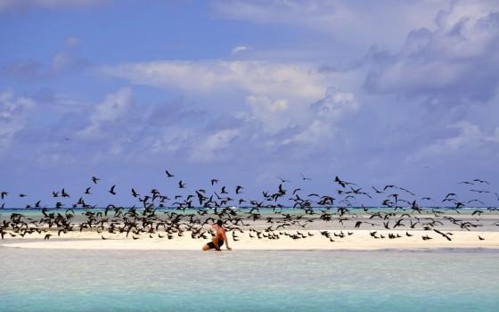 cabanes tchanquées sur l'ile aux Oiseaux