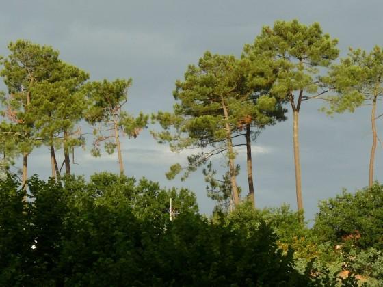 Certaines villas à la vente ont vue sur la forêt du PYLA SUR MER