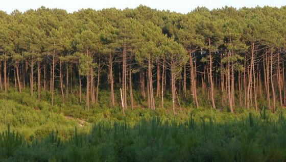 Villas à vendre à Pyla sur Mer Bassin d'Arcachon avec vue sur la forêt