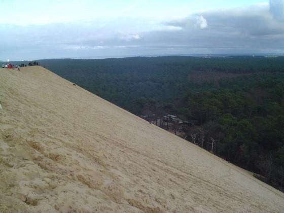 Les villas à vendre proche de la Dune du Pyla ont vue sur la forêt