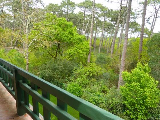 Vente immobilière d'une villa à PYLA SUR MER avec vue sur la forêt