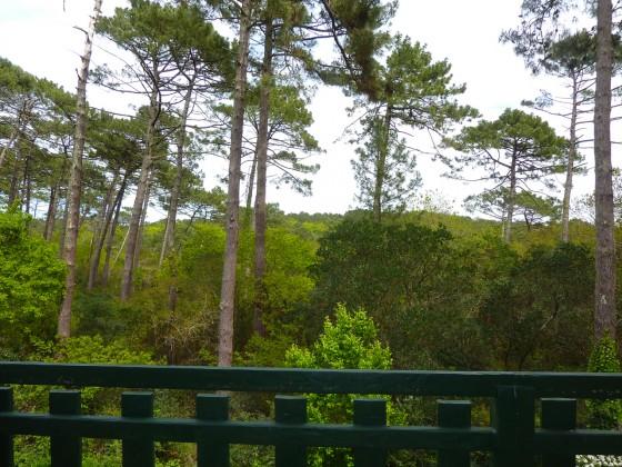 Villa traditionnelle à vendre avec vue sur la forêt du PYLA SUR MER
