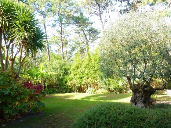 Villa de charme avec 4 chambres, sauna et jacuzzi, joli jardin, à proximité de la plage du Moulleau 33120