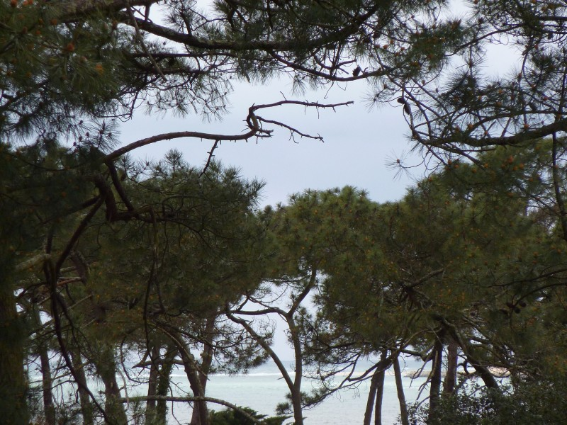 A VENDRE BASSIN D'ARCACHON VILLA 5 CHAMBRES QUARTIER RÉSIDENTIEL
